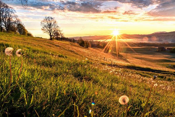 Sonnenaufgang bei Lindenberg. Landschaftsbild Bild Fotografie günstig kaufen