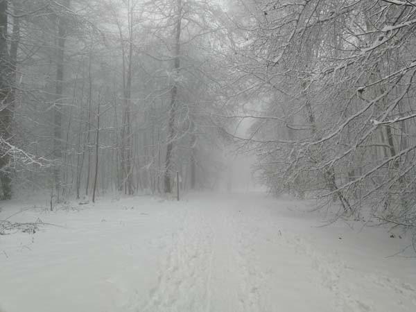 Ferienwohnung am Bodensee Heiligenberg Friedwald im Winter