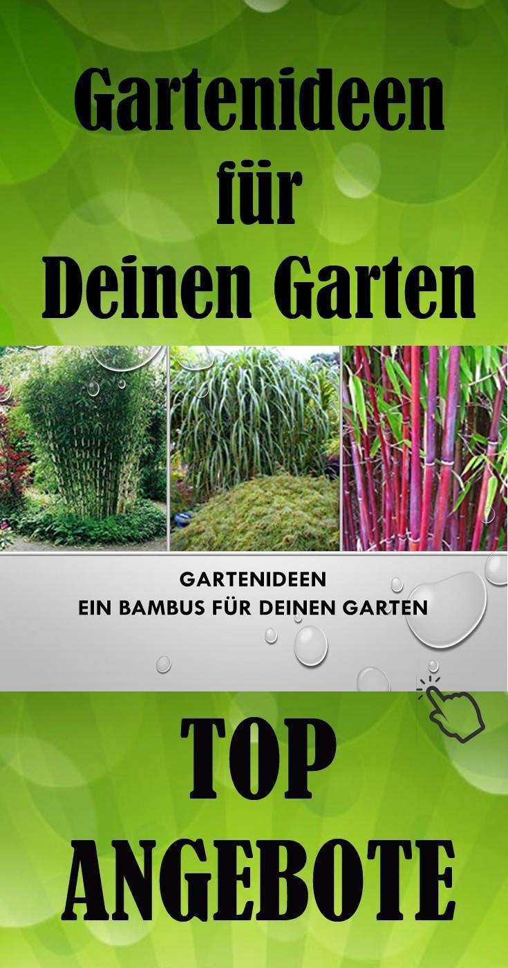 Gartenideen einen Bambus für deinen Garten günstig kaufen zur Gartengestaltung