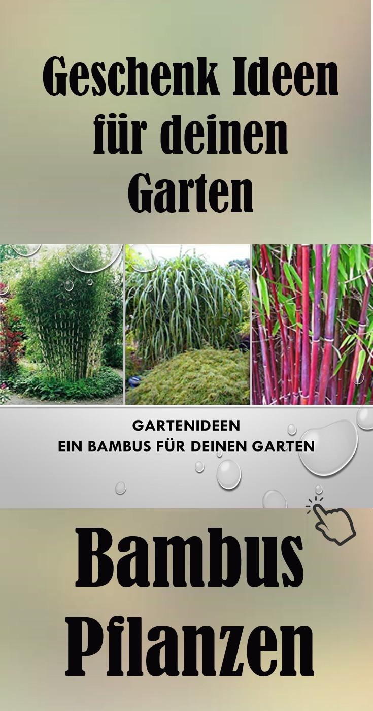 Geschenk Idee für deinen Garten Bambuspflanzen online günstig kaufen und verschenken
