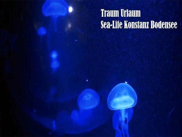 Traum Urlaub Sea-Life Konstans Bodensee